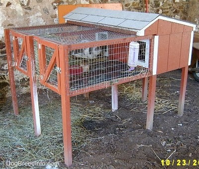 Side view of Rabbits in a red wooden double hutch that is outside.