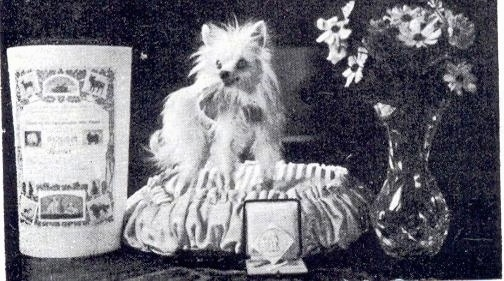 A black and white photo of a Seidenspitz dog that is standing on a dog bed. To the left of it is a bucket, to the right of it is a vase of flowers and the dog is looking towards the left.