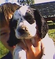 A black and white Colonial Cocker Spaniel puppy is being held in the air by a boy outside
