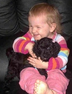 A Cavapoo Puppy is being held by a child in colorful clothing on a black leather couch
