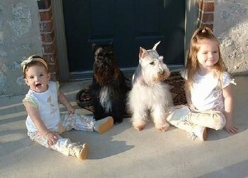 Two girls are sitting on a stone porch and there are two Miniature Schnauzers sitting in between them.