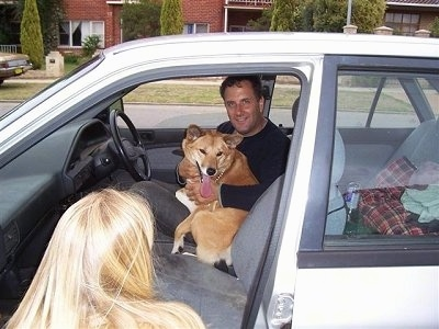 Lindy the Dingo is sitting in the lap of a man named Nic on the drivers side of a car. Lindys tongue is hanging out. There is a blonde lady kneeling next to the passenger seat and looking at Nic and Lindy