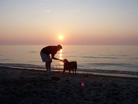 A Golden Retriever is giving a frisbee to a man on a beach in front of water with the sun setting behind them.