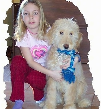 A cream and tan Goldendoodle has a blue rope toy in its mouth. There is a little girl in a pink shirt hugging the dog sitting next to her