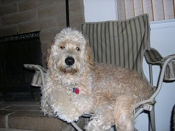 A Goldendoodle is laying on a lawn chair. There is a fireplace next to it