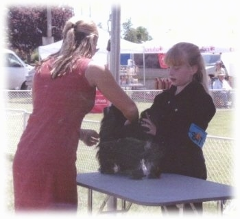 A blonde haired girl is standing behind a black with white dog standing on a grooming table outside. The dog is being inspected by a lady in a pink dress.