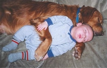 A Golden Retriever and an infant baby boy are sleeping side by side on a tan couch. The dog has its paw over top of the baby's belly.