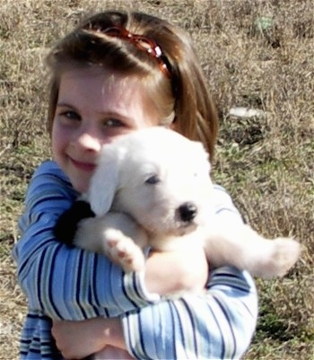 Front view - A child is standing outside in grass with a smile on her face holding a white Old English Sheepdog puppy belly out in her arms.