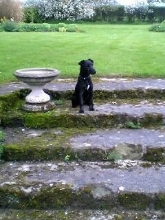 A black Patterdale Terrier is sitting on an old set of backyard steps next to a ceramic bird bath looking to the right.