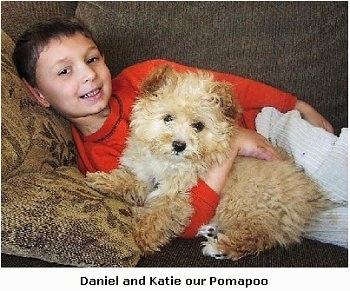 A boy is laying on a couch behind a wavy coated tan Pomapoo puppy. The boy is smiling and the puppy is looking forward. Overlayed at the bottom of the image are the words - Daniel and Katie our Pomapoo.