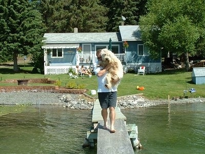 A man is walking down a dock with a tan Soft Coated Wheaten Terrier dog in his arms. There is water on each side of the dock and a blue house behind him,