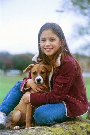 A little brown with white Staffordshire Bull Terrier puppy is sitting in the lap of a girl in a red jacket and blue jeans who is hugging the pup. The girl is looking forward.