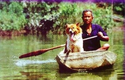 A man is guiding a boat and sitting in the boat is his Thai Bangkaew Dog who has its mouth open and tongue out. The dog has a thick furry coat.