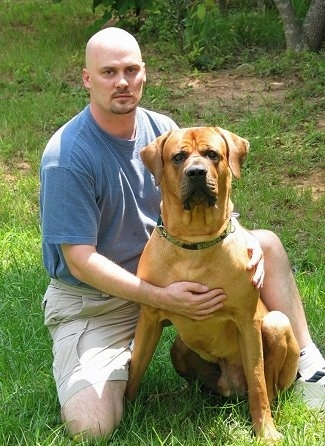 A man in a blue shirt is kneeling next to an extra large breed brown with white Tosa dog. They are outside in grass and looking forward.