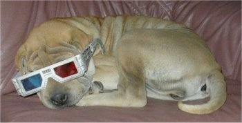 A wrinkly tan Shar-Pei puppy is laying across a couch and it has a pair of 3D glasses on its head. The pup has a big head and a thick tail.