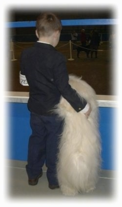 The back of a boy and a white fluffy dog that is standing up against the bannister in front of them.