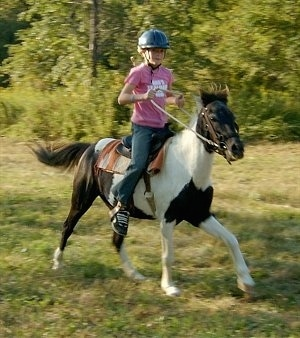 Action shot - A girl in a pink shirt and blue riding helmet is riding a brown and white paint pony.