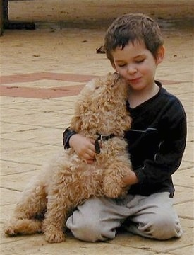 River the Australian Labradoodle sitting on ground licking a boys face