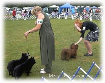A lady in a black dress is petting the head of the two chocolate havanese dogs she is standing next to. Across from them is a lady in a grey dress looking down at her two dogs.