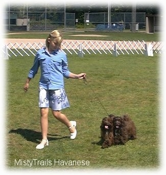 A blonde-haired girl is running across a field course with two chocolate with white dogs.