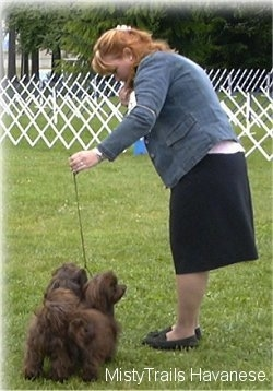 A lady is leaning over looking down and holding the leash of two small, long haired, chocolate brown dogs standing in a field.