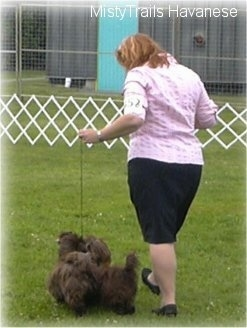 A lady in a pink shirt is walking two small chocolate dogs across an enclosed field on a course at a dog show.