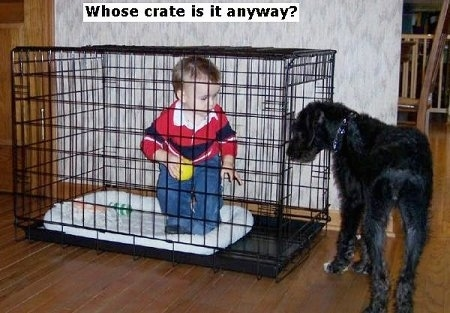 A toddler is standing with a yellow ball inside of a dog cage. A black dog is beginning to walk into the cage