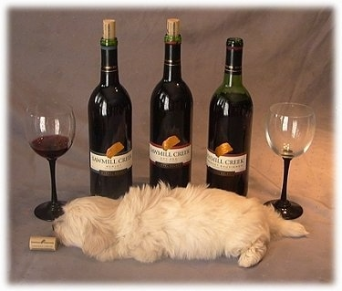 A white puppy is laying down on a backdrop in front of Three Wine Bottles. There is a quarter full glass on the left and there is an empty glass on the right. There is a cork in front of the puppy