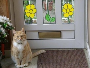 An Orange Tiger Cat is sitting next to a rug in front of a stain glass door with flowers on it