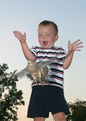 A little boy letting go of a Dove