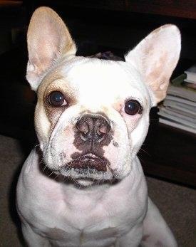 High Impress Dog Show Results