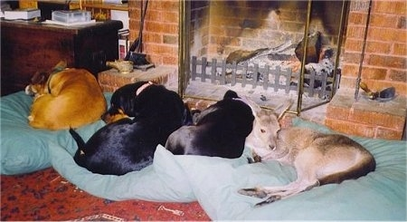 Three dogs and one kangaroo laying on a line of green dog beds in front of a brick fireplace inside of a house.