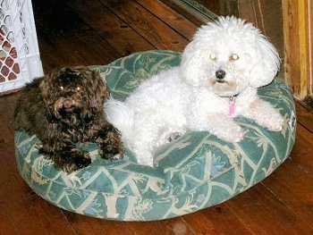 Two dogs on a green dog bed on top of a hardwood floor with a white plastic baby gate to the left of them.
