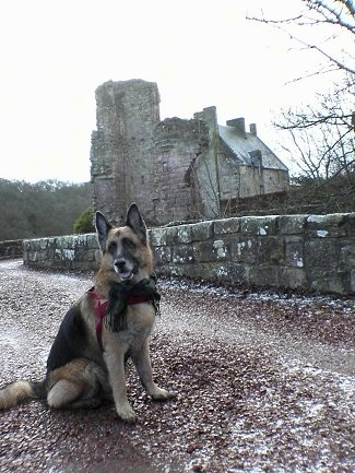 A black and tan German Shepherd is sitting on a path with an old stone building in the background