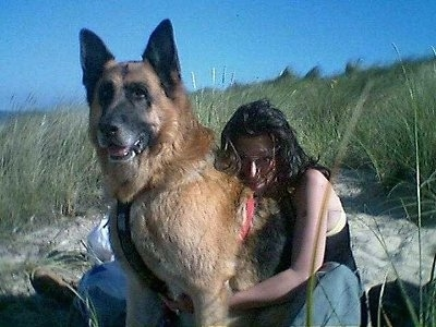 A very large black and tan German Shepherd is sitting on sand in between tall grass with a lady hugging the back of the dog