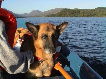 A black and tan German Shepherd is sitting in a boat that is out on the water. The dog is wearing a life jacket and there is a person next to it