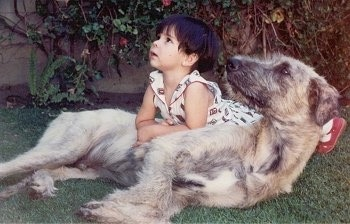 Robin, the Irish Wolfhound with 3 year old Ana