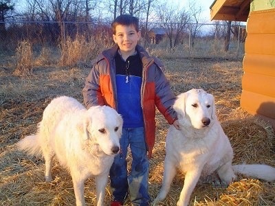Nic with his Kuvasz guardians Beauty and Aidan