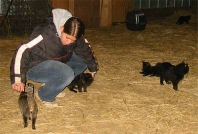 Ayla a person with Miniature Cats Lilly, Pippy, Nip Jr., and Tomy in a barn