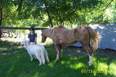 The backside of a tan with white pony. The Pony is looking down at a girl in a backwards hat. In front of the girl is a Great Pyrenees dog.