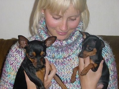 A lady with blonde hair and a knit sweater is holding up two small black and tan Prazsky Krysarik puppies