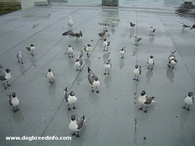 a flock of seagulls perched on a roof
