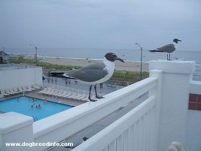 Close Up - Two seagulls standing on a railing