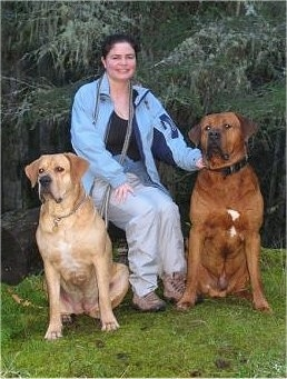 A lady in a blue jacket is sitting on a stool and on her sides are a two dogs, a red with white and black Tosa and a fawn Tosa dog.