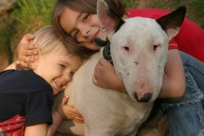 Arnold the Bull Terrier being hugged by two smiling children. Arnold is looking at the camera holder