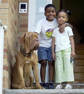 Tonka the Dogue de Bordeaux is sitting next to a boy with an arm over his sister in front of a house.