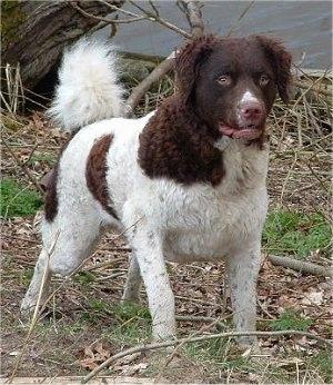http://www.dogbreedinfo.com/images14/wetterhounJelle2halfYearsOld.jpg