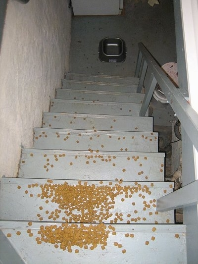 Food Bowl at the bottom of the basement steps with the dry kibble all over the steps from the top all the way to the bottom on the floor