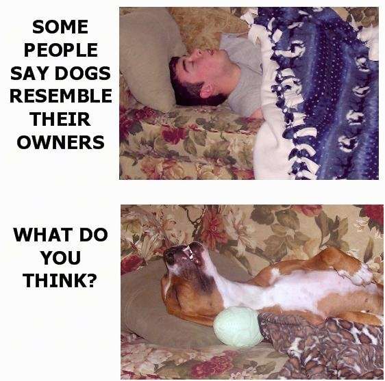 Top Image - A person sleeping on a couch covered in a blue with white blanket with their head rolled back and their mouth open. The Words next to the image say - SOME PEOPLE SAY DOGS RESEMBLE THEIR OWNERS. Bottom Image - A brown with white Boxer dog laying on a couch next to a blanket with its head rolled back and mouth open in the same way as the human above. The Words next to the image say - WHAT DO YOU THINK?