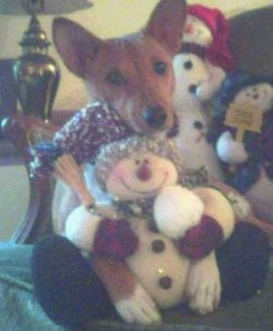 A brown with white Basenji dog is sitting on a couch with its head on a stuffed plush snowmen doll. There are two other snowmen behind it